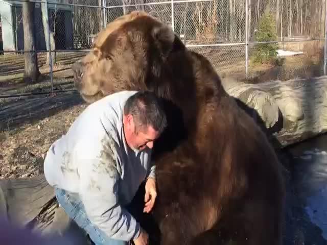 Медведь играет с мужчиной