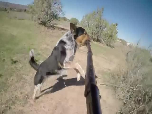 Собака, которая обожает селфи