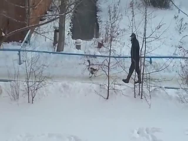 Житель Омска выгуливает домашнего гуся