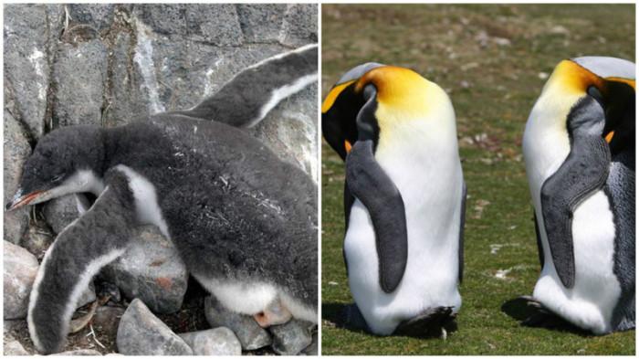 Как спят различные животные (10 фото)