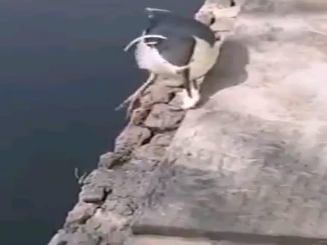 Сообразительная птица ловит рыбу