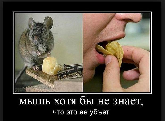 http://cdn.trinixy.ru/pics5/20160114/demotivatory_05.jpg