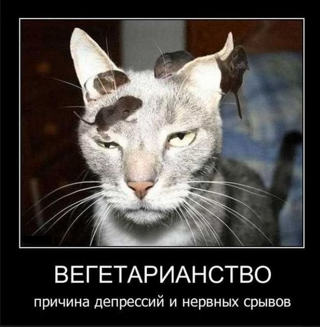 http://cdn.trinixy.ru/pics5/20160114/demotivatory_28.jpg