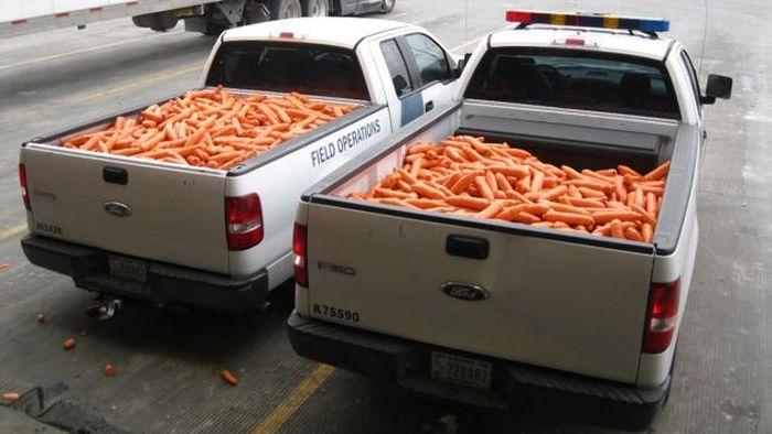 В США пытались ввезти крупную партию марихуаны под видом моркови (2 фото)