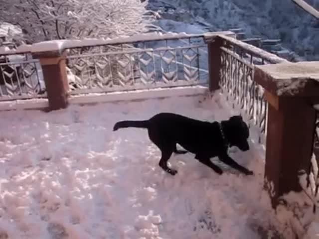 Забавный пес впервые видит снег