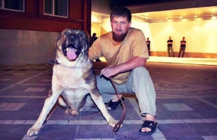 Спикер чеченского парламента Магомед Даудов пригрозил оппозиционерам овчаркой Кадырова (2 фото)