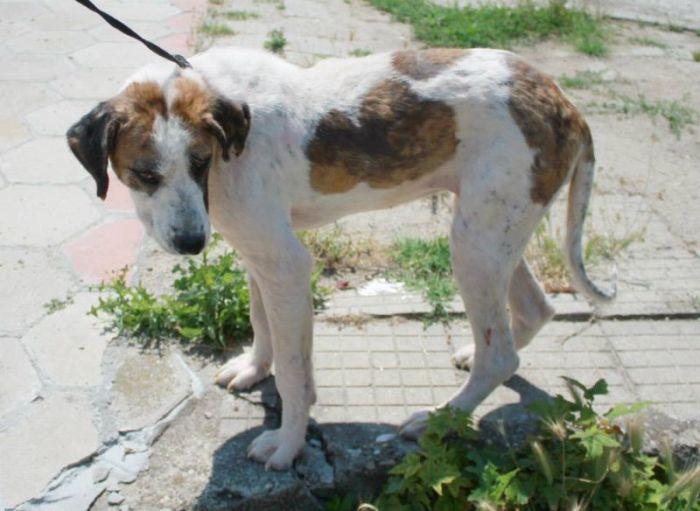 Спасение бездомной собаки по кличке Кхалиси (24 фото)