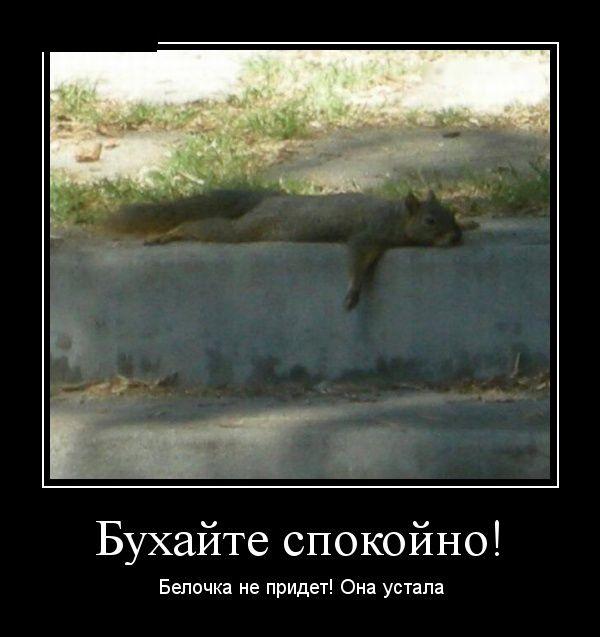 http://cdn.trinixy.ru/pics5/20160121/demotivatory_09.jpg