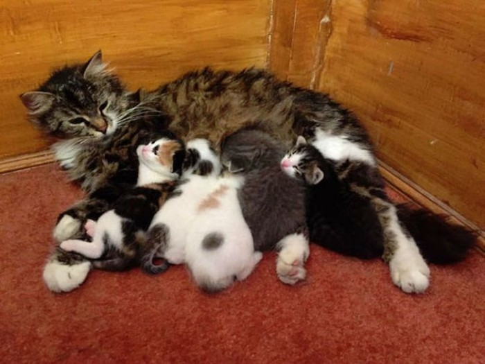 Добрый турецкий имам пускает в мечеть всех бездомных кошек (9 фото)