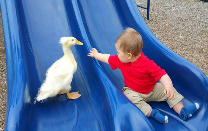 Meet The Little Boy That Became Best Friends With A Duck (13 pics)