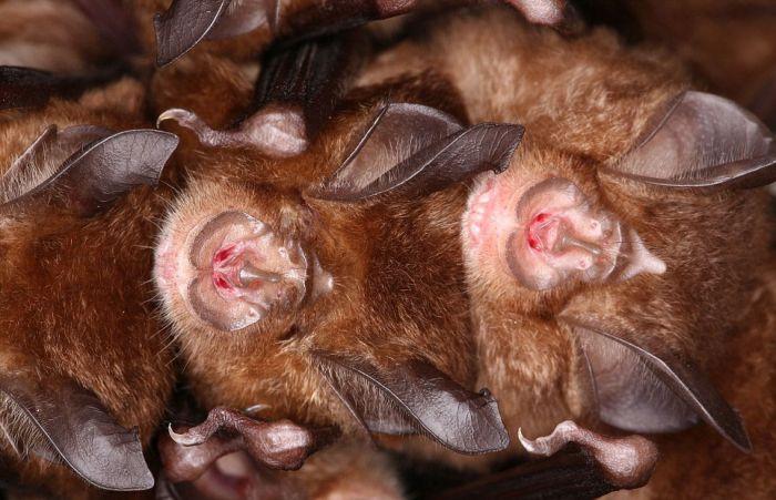 В Японии тысячи летучих мышей прятались от холода в водосточном тоннеле (14 фото)