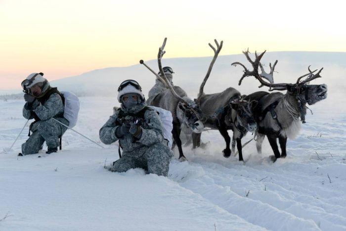 Российские разведчики научились управлять собачьими и оленьими упряжками (15 фото)