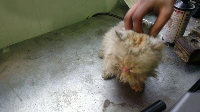 Сотрудники автосервиса извлекли из моторного отсека автомобиля живого кота (14 фото)