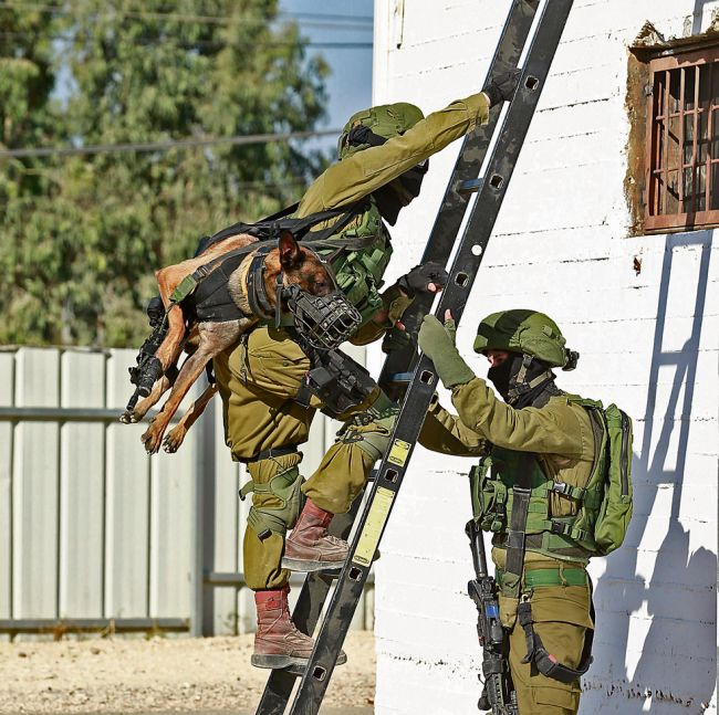 Переноска тактических собак в израильской армии (3 фото)