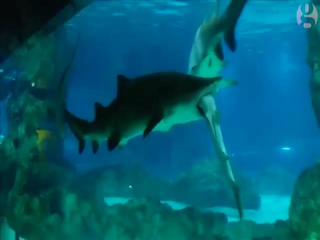 В аквапарке акула съела другую акулу