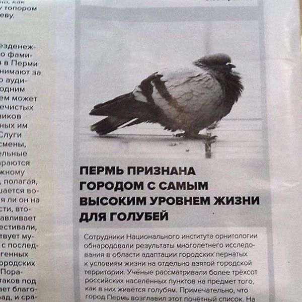 Подборка смешных заголовка из газет, журналов и интернет-изданий (24 фото)