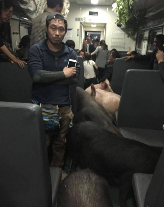 Необычные пассажиры в китайском поезде (6 фото)