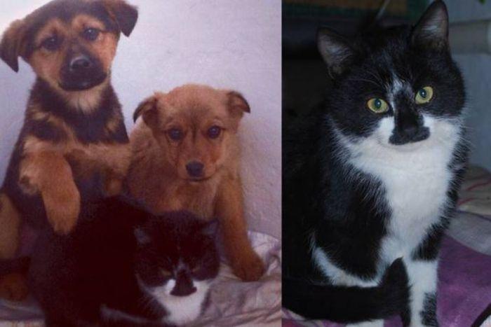 В Анапе кот кормил брошенных щенков мышами (2 фото)