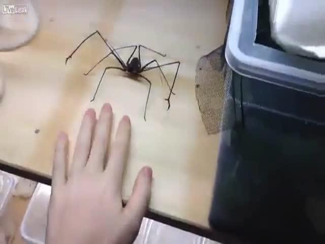 Парень играет с «милым» паучком