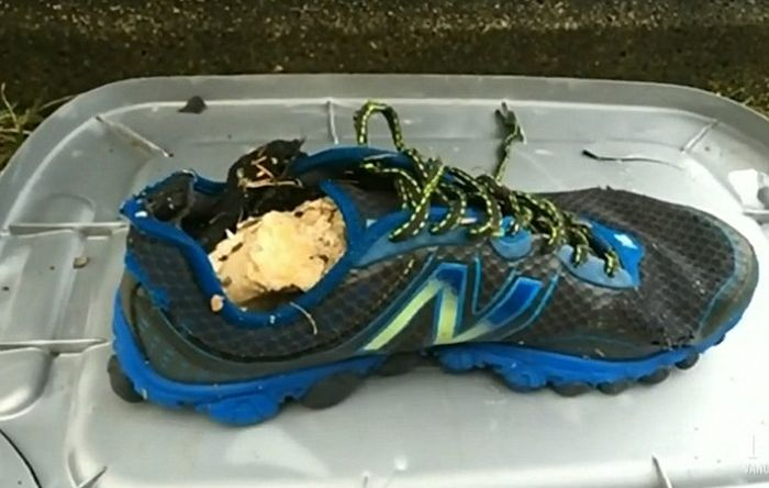 На пляже Ванкувера обнаружили обутую в кроссовок человеческую ступню (3 фото)