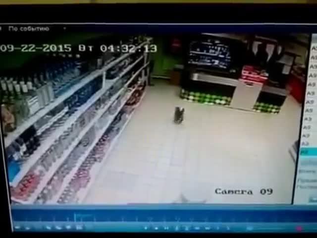 Кот устроил погром в магазине