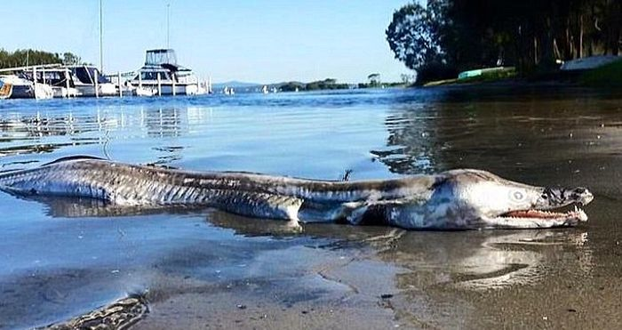 Странное существо, выброшенное на берег Австралии, шокировало пользователей сети (2 фото)