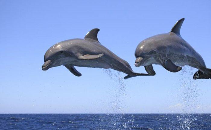 Шокирующая правда о дельфинах (14 фото)