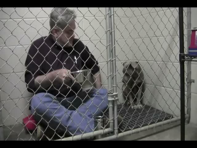 Американский ветеринар позавтракал в клетке бездомной собаки