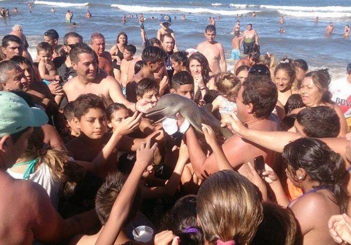 В Аргентине отдыхающие до смерти замучили выброшенного на берег детеныша дельфина (4 фото)