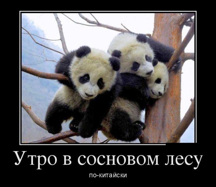 http://trinixy.ru/pics5/20160219/demotivatory_24.jpg