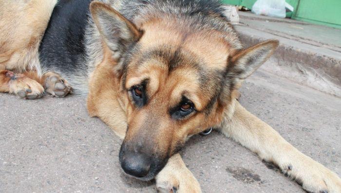 В Братске пенсионер вторую неделю ждет на улице пропавшую собаку (3 фото)