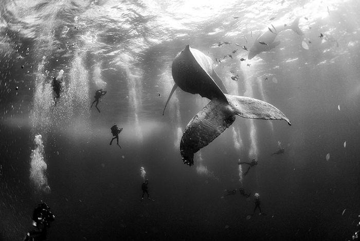 Лучшие снимки фотоконкурса World Press Photo 2015 (28 фото)