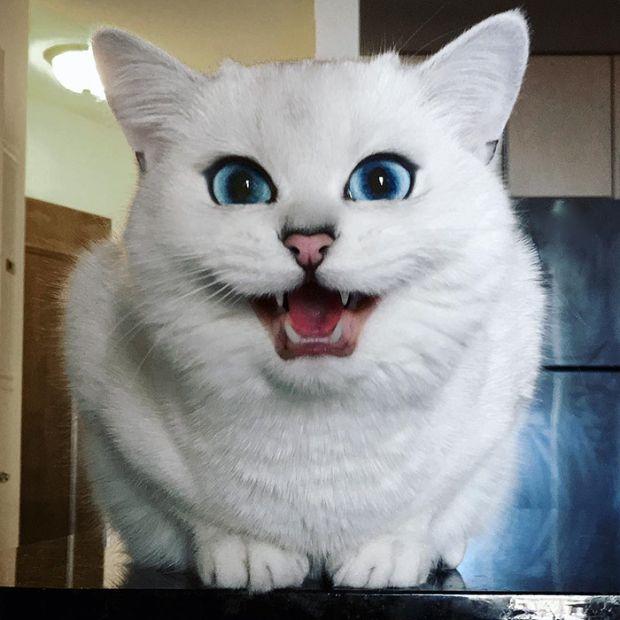 Картинки по запросу Кот с самыми красивыми глазами в мире