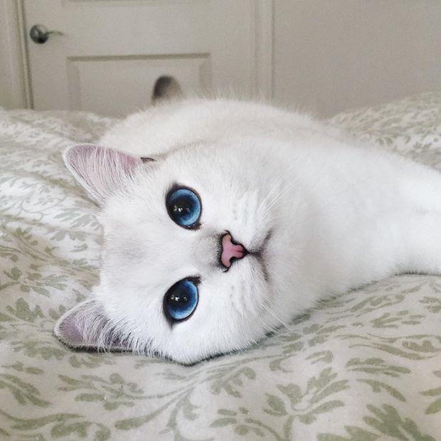 Коби - кот с самыми красивыми глазами (17 фото)