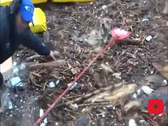 Добрые люди помогают животным