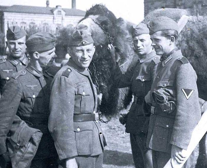 Зачем немцы пили воду с фекалиями верблюдов в Африке? (2 фото)