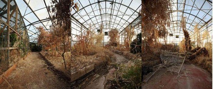 Научный эксперимент «Биосфера-2» - рай, превратившийся в ад (6 фото + текст)