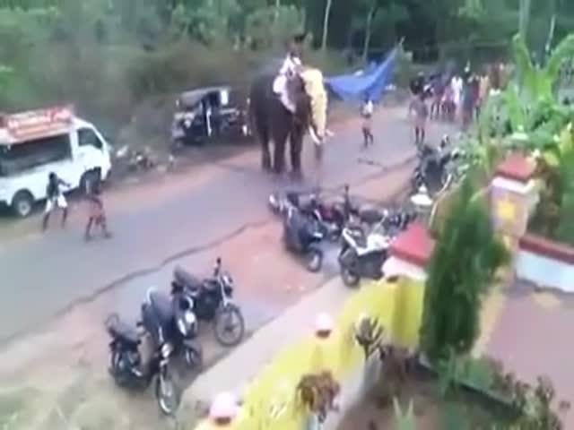 Агрессивный слон повредил 27 транспортных средств