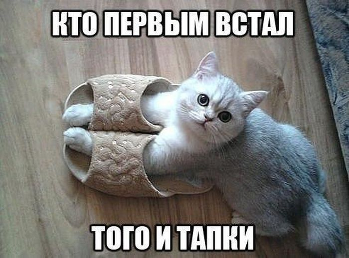 http://cdn.trinixy.ru/pics5/20160301/podborka_vecher_26.jpg