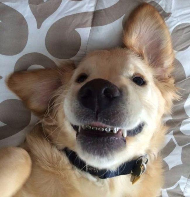 Милый щенок с брекетами покорил интернет (7 фото)