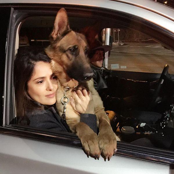 Сосед Сальмы Хайек застрелил ее собаку (2 фото)