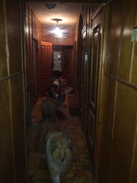Пожилая женщина и огромная стая собак разгромили арендованный коттедж (9 фото)