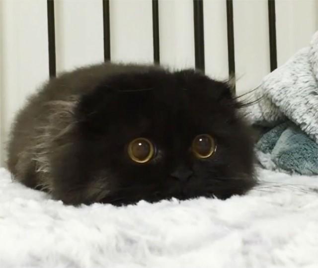 Вечно удивленный кот по кличке Гимо (15 фото)