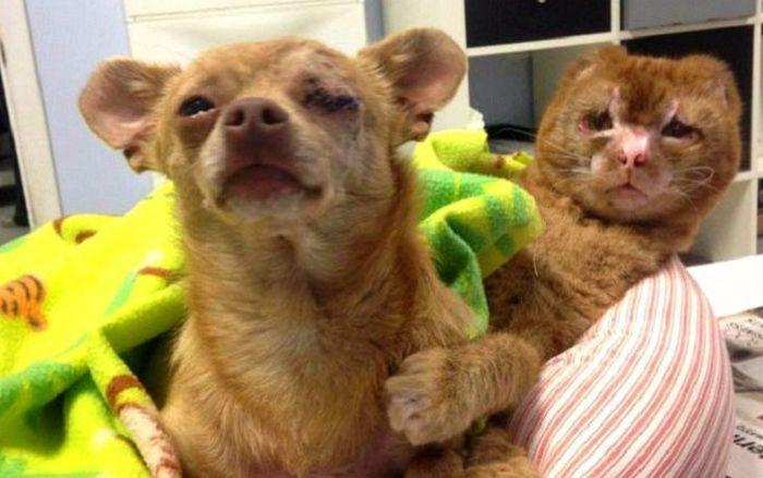Кот стал ухаживать за другими животными ветеринарной больницы (11 фото)