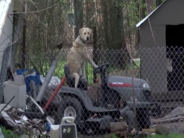 Собака нашла себе удобное местечко