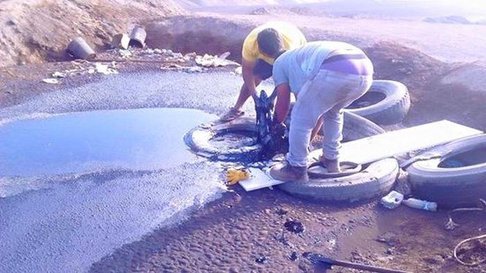 Спасение собаки из ямы с дегтем (9 фото)
