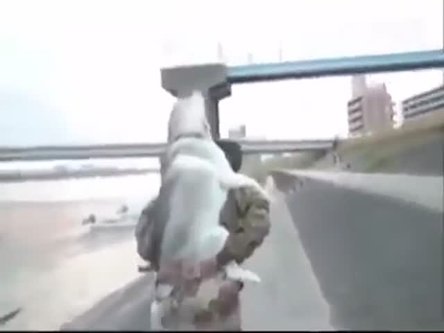 Уставшая собака просится на руки