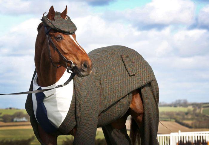 В Великобритании представили первый в мире костюм-тройку для лошади (5 фото)