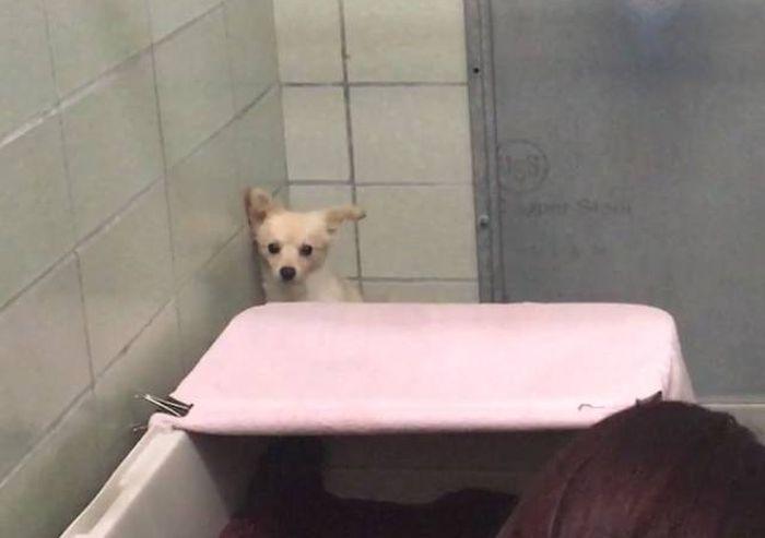 Щенки избавили собаку от страха (5 фото)