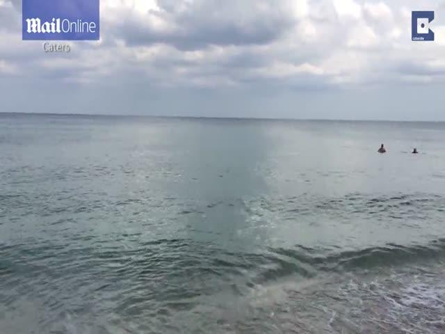 Акула выгнала отдыхающих из воды
